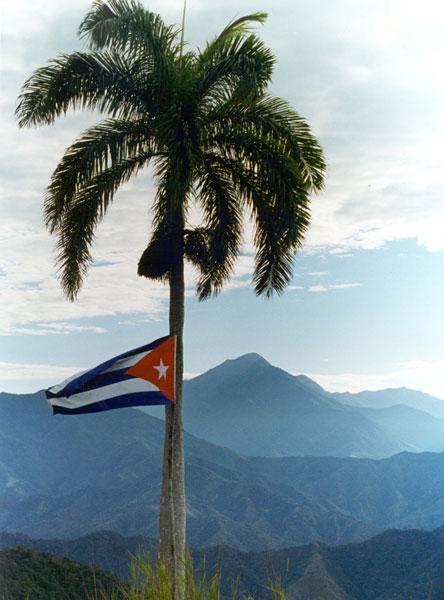 palma real cubana